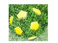 аватары: Футбольный мяч из травы