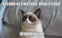 аватары: Злой кот