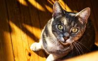 аватары: На деревянном полу сидит кот