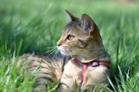 аватары: Кошка с розовым поводком в траве зеленой