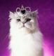 аватары: Королева кошка