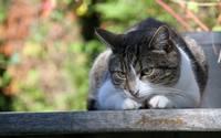 аватары: кошка приглядываясь с высоты