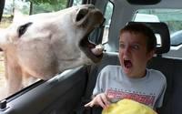 аватары: испуг мальчика в салоне машины