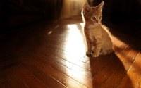 аватары: на паркете pыжий котенок