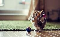 аватары: забавный котенок играючись
