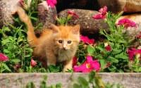 аватары: рыжий котенок в розовых цветах