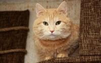 аватары: старый добрый кот