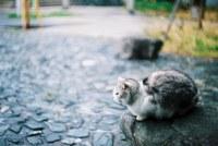аватары: пушистая кошка на камне сидит