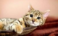 аватары: кошка лежит отдыхает