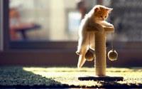 аватары: котенок держится из последних сил