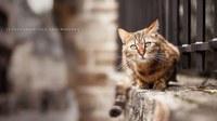 аватары: кот под забором сидит