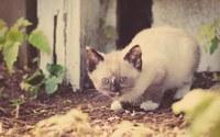 аватары: боязливый котенок