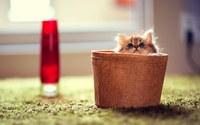 аватары: котенок смотрит на мир из колпака