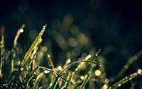 аватары: Блики на утренней траве с росой