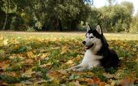 аватары: Собака на стороже
