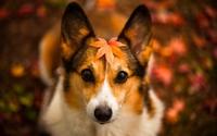 аватары: Собака с осенней листвой