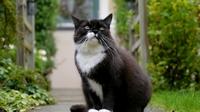 аватары: Ленивый кот недалеко от дома