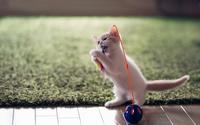 аватары: Игривый светлый котенок