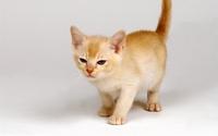 аватары: Вредный котик