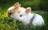 аватары: Два светлых маленьких кролика в травке зеленой
