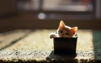 аватары: Из коробочки котенок