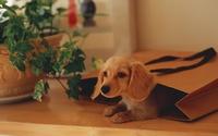 аватары: Из пакета щенок