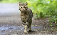 аватары: Гордый кот гуляет