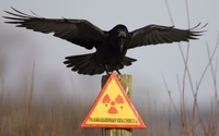 аватары: Ворон охраняющий знак радиационной опасности