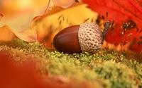 аватары: Упавший жолудь осенней порою