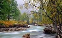 аватары: У берегов речки деревья