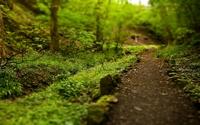 аватары: Тропинка в зеленом лесу