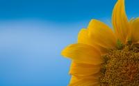 аватары: Лепестки подсолнуха на голубом фоне
