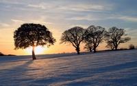 аватары: Из-за дерева зимние лучики солнца