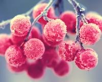 новинка Гроздь ягоды в кристаликах льдинках