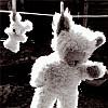 аватары: Мишка после стирки