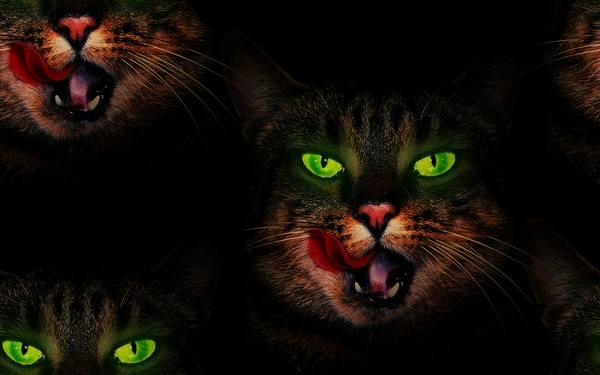 Кошка зеленые глаза бесплатно