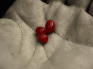 обои Три красные пилюли на ладони фото