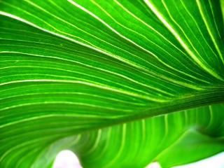 обои Красивый зелёный лист фото