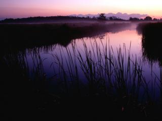 обои Летний пруд на восходе фото