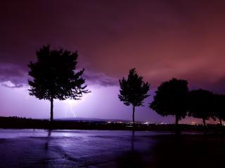 обои Деревья и молния фото