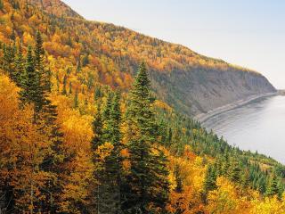 обои Натуральная красота - осень фото