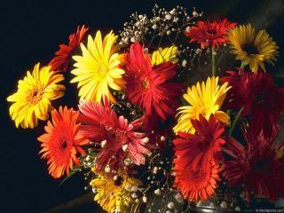 обои для рабочего стола: My Flower