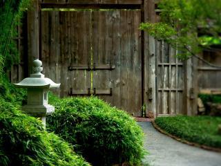 обои Зелёный сад фото