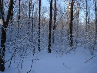 обои Зимний вечер в парке фото