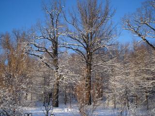 обои Красивая зимняя природа фото