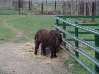 обои Пони в Заповеднике фото