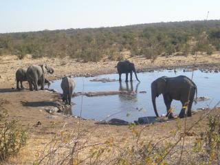обои Слоны на водопое фото
