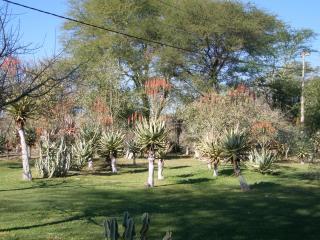 обои Сад с алое фото