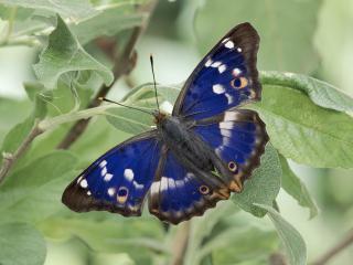 обои Красивая синяя бабочка фото