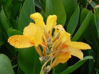 обои Большой жёлтый цветок фото